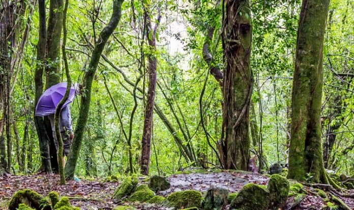 Mawphlang Sacred Forest Is The Best Place To Visit In Shillong