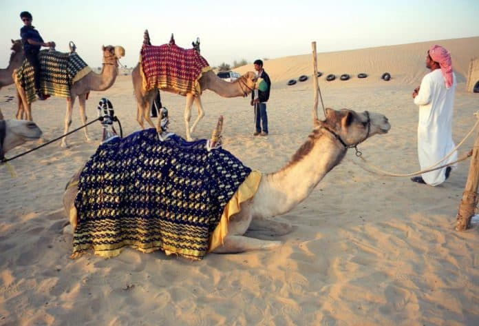 Camel On A Camel - Look Twice To Understand