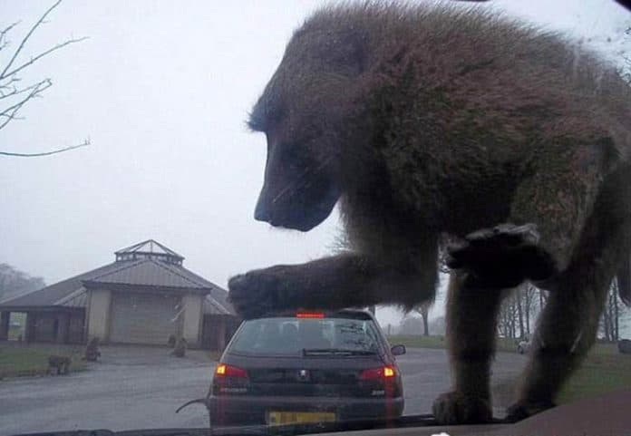 Car Under Bear - Confusing & Double Meaning Photo