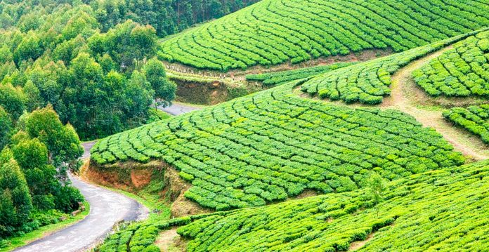 Munnar In Kerala Is Famous For Hill Stations In India